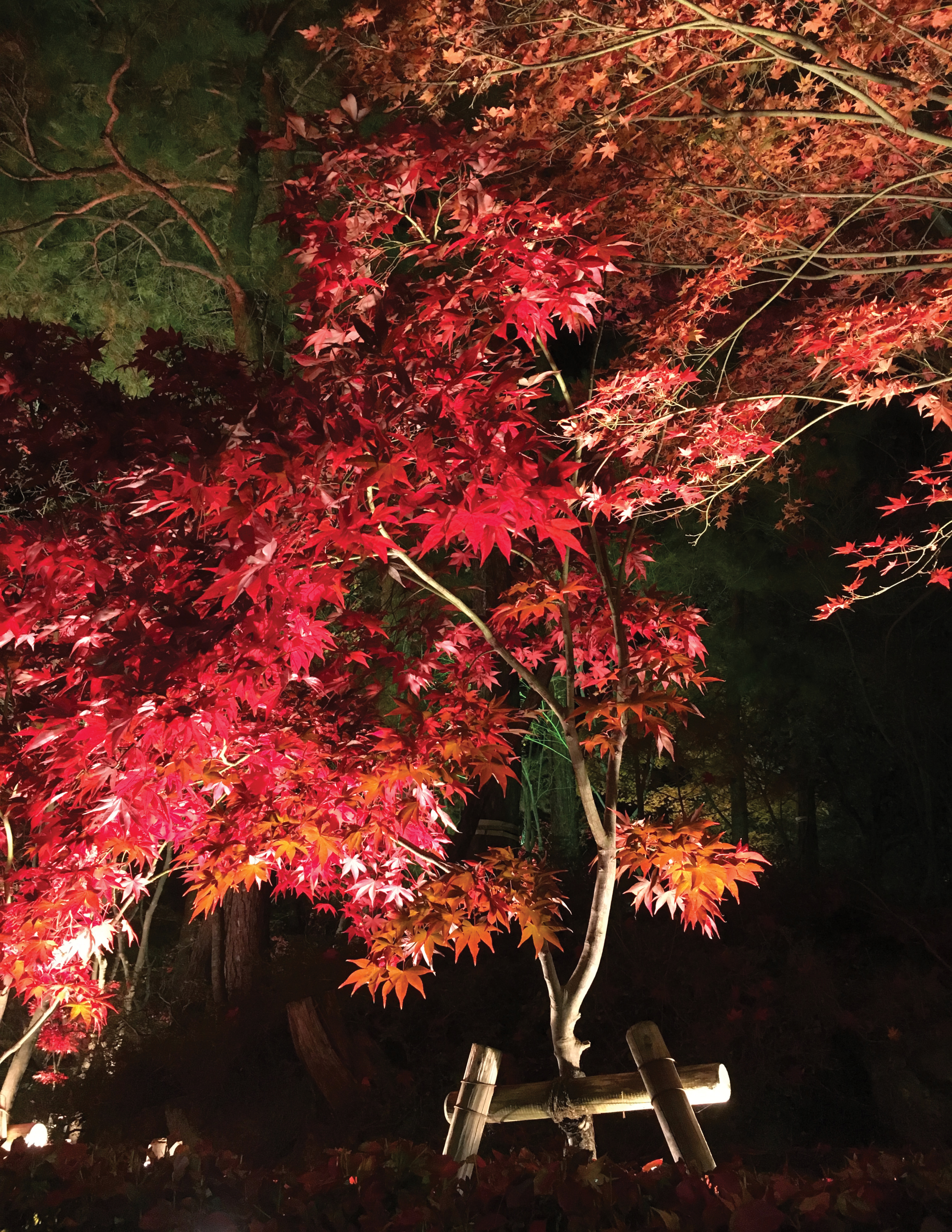 Autumn in Niigata:  Where to fall in love with Fall